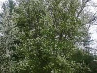 drzewokrzew_906