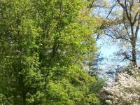 drzewokrzew_916