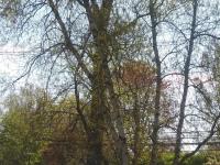 drzewokrzew_918