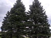 drzewokrzew_928