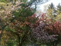 drzewokrzew_931