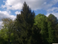 drzewokrzew_939