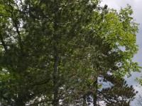 drzewokrzew_947