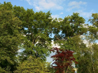 drzewokrzew_948