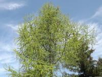drzewokrzew_949