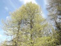 drzewokrzew_951
