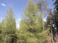 drzewokrzew_952