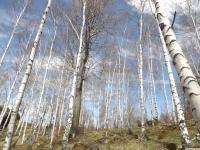 drzewokrzew_953