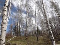 drzewokrzew_954