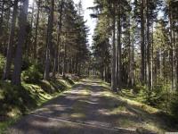 drzewokrzew_956