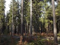 drzewokrzew_960
