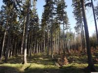 drzewokrzew_961