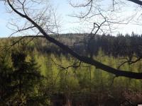 drzewokrzew_962