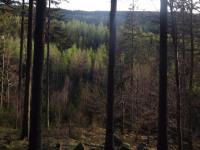 drzewokrzew_963