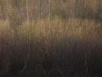 drzewokrzew_967