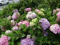 kwiat_002