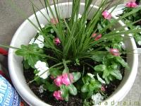 kwiat_003