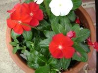 kwiat_004