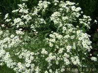 kwiat_006