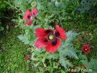 kwiat_007