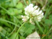 kwiat_008