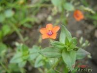 kwiat_009