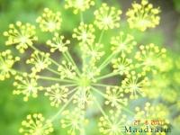 kwiat_010