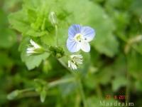 kwiat_012