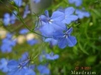 kwiat_013