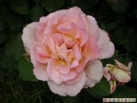 kwiat_030