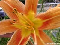kwiat_035