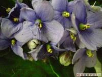 kwiat_037