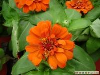 kwiat_044