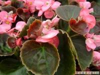 kwiat_048