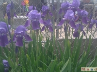 kwiat_058