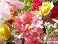 kwiat_060