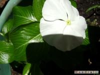 kwiat_070