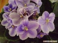 kwiat_071