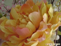 kwiat_072