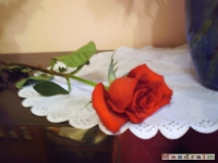 kwiat_078