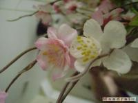 kwiat_084