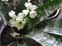 kwiat_086