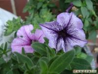 kwiat_087