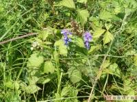 kwiat_088
