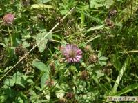kwiat_091