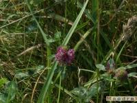 kwiat_092