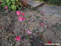 kwiat_103