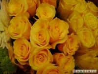 kwiat_107