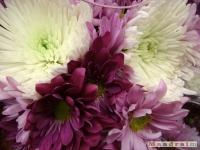 kwiat_109