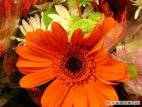 kwiat_112